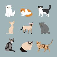 Collection of cat breeds