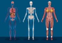 Collection of female human anatomy