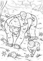Gorilla with gorilla infants
