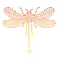 Intricate dragonfly design