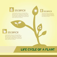 Life cycle of a plant infographic