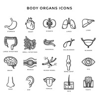 Set of body organs icons