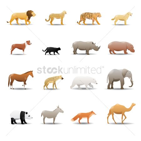 Animal : Collection of animals