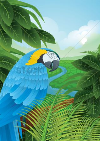Birds : Parrot in a rainforest