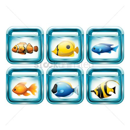 Animal : Set of fishes in aquariums