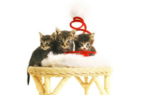 Three kittens sitting on a chair