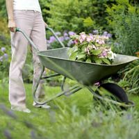 Transferring the potted flower using a wheelbarrow