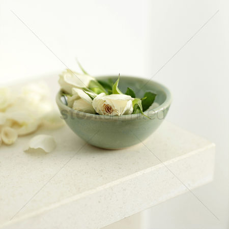 Spa : A bowl of white roses with a few petals scattered beside the bowl