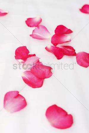 Spa : Rose petals on bed