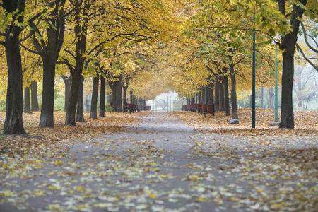 Environment : View of walkway and autumn trees in park