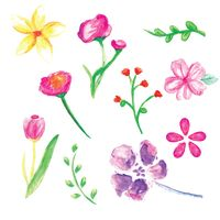 A collection of watercolor flowers