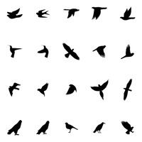 Bird silhouette collection