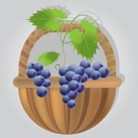 Popular : Bunch of grapes in basket