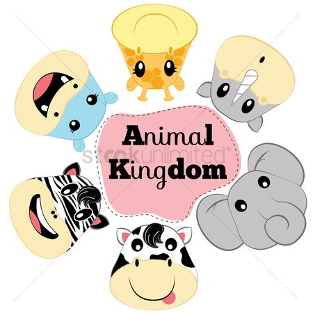 Cow : Animal kingdom
