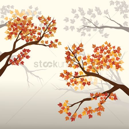 Summer : Autumn tree leaves