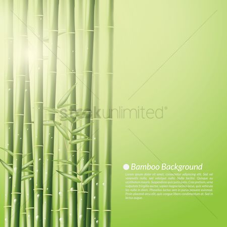Copy space : Bamboo background