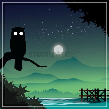 Owl : Beautiful scenery at night