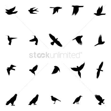 Hawks : Bird silhouette collection