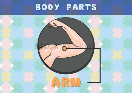 Arm : Body parts chart for arm
