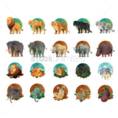 Elephant : Collection of animals