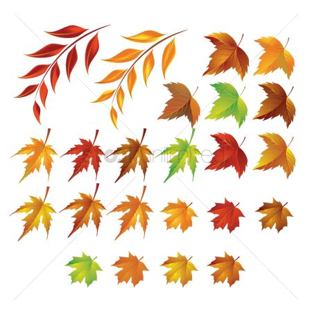 Styles : Collection of autumn leaves