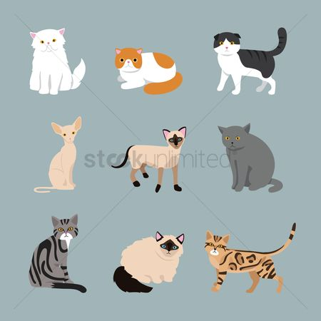 Fold : Collection of cat breeds