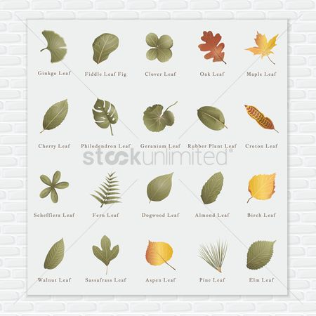 Brick : Collection of leaves