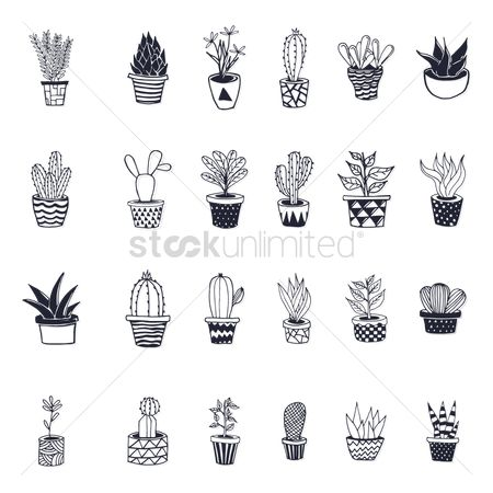 Cactus : Collection of potted desert plants