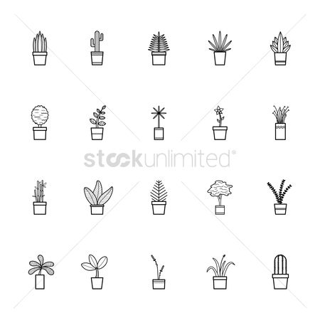 Flower pot : Collection of potted plants