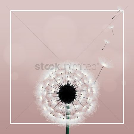 Season : Dandelion background