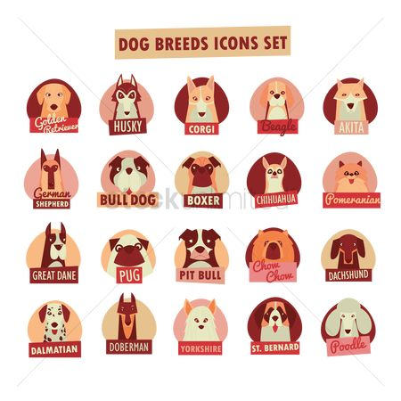 Bull : Dog breed icon set