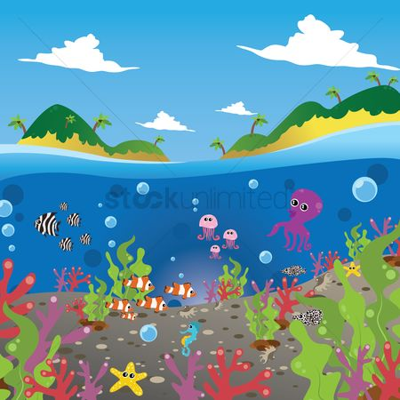 Marine life : Exotic islands and marine life
