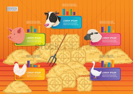 Duck : Farm and agriculture infographic