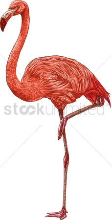 Sketching : Flamingo