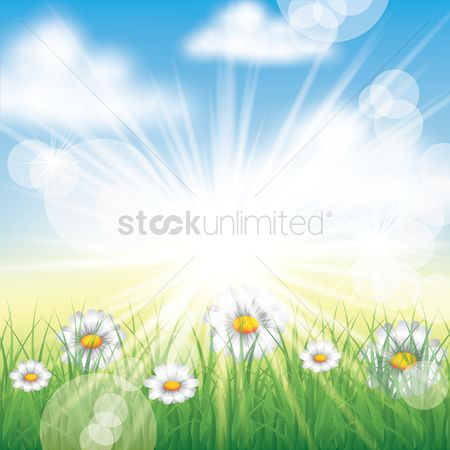 Sunray : Floral background