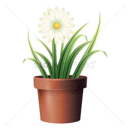 Flower pot : Flower in gardening pot