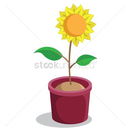 Flower pot : Growing plant with flower in pot