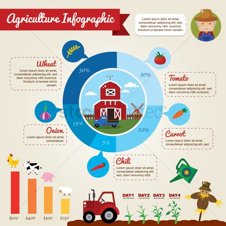 Cow : Infographic of agriculture