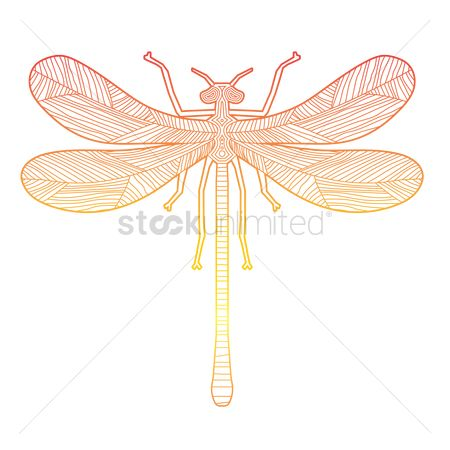 Sketching : Intricate dragonfly design