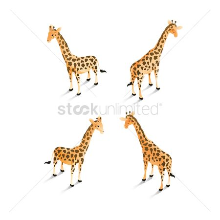 Backview : Isometric giraffes