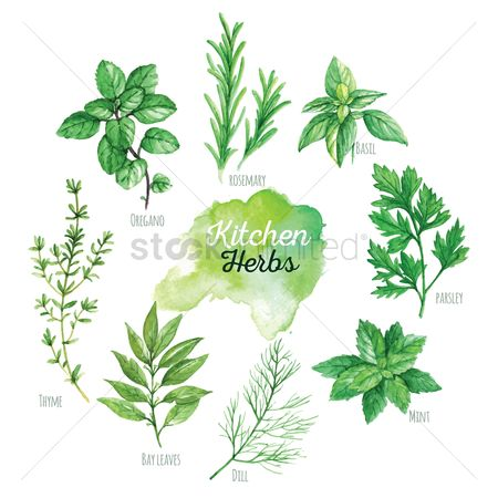 Sets : Kitchen herbs