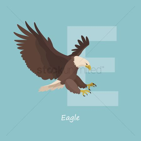 Hawks : Letter e for eagle