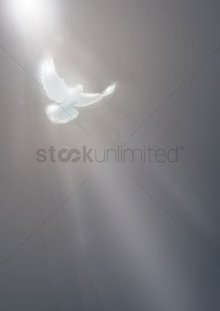 Lighting : Light shining on a flying dove poster