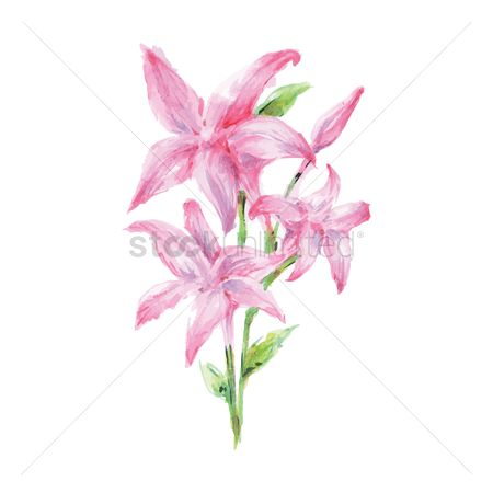 Oil : Lily flowers