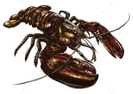 Marine life : Lobster