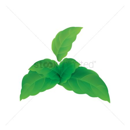 Nutritions : Mint leaves