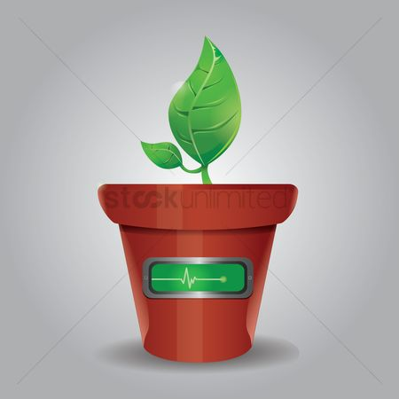 Flower pot : Potted palnt