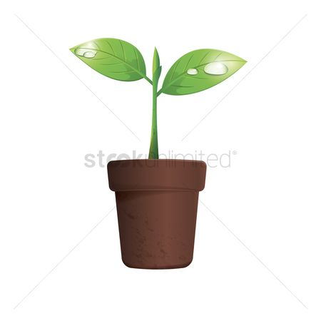 Stems : Potted plant