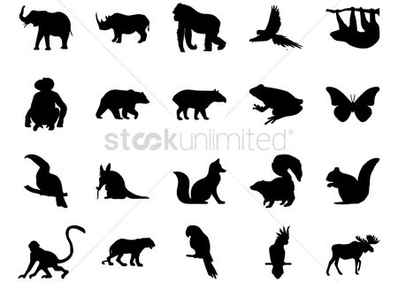 Bear : Set of animal icons