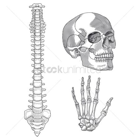 Head : Set of human skeleton parts
